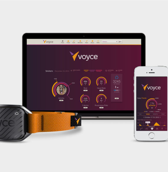 Voyce pet monitoring system